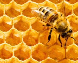 Close up of beeswax with bee.