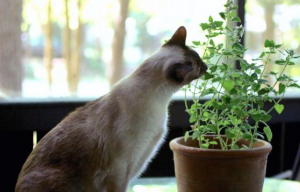 Cat sniffing and about to eat plant.