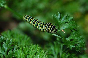 Caterpillar on stem.