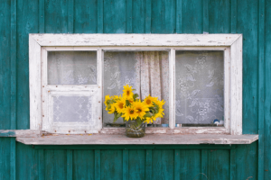 Sunflowers in window.