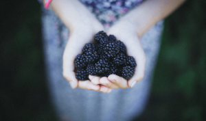 Handful of black mulberries