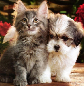 A kitten and puppy.