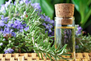 Rosemary with a bottle of oil