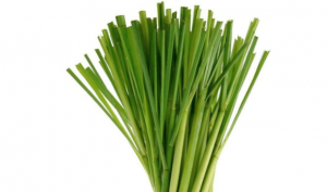 Bundle of Lemongrass