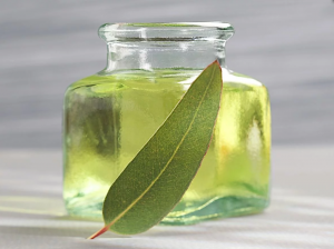 A Jar Of Eucalyptus Essential Oil.