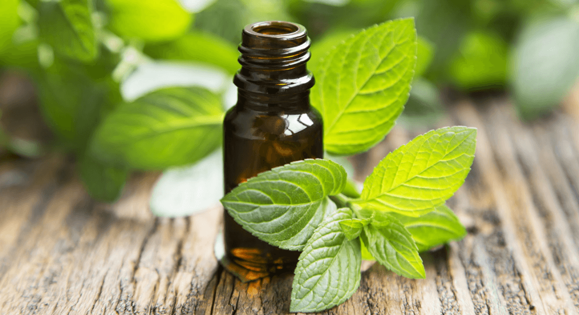 Lemon Balm Essential Oil: Fighting Cold Sores And Herpes And