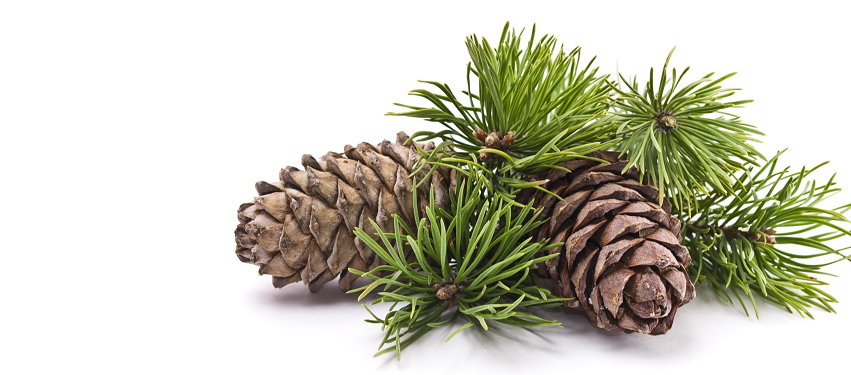 Pine cones and leaves.