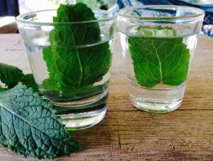 Two shot glasses with clear liquid and green leaves.