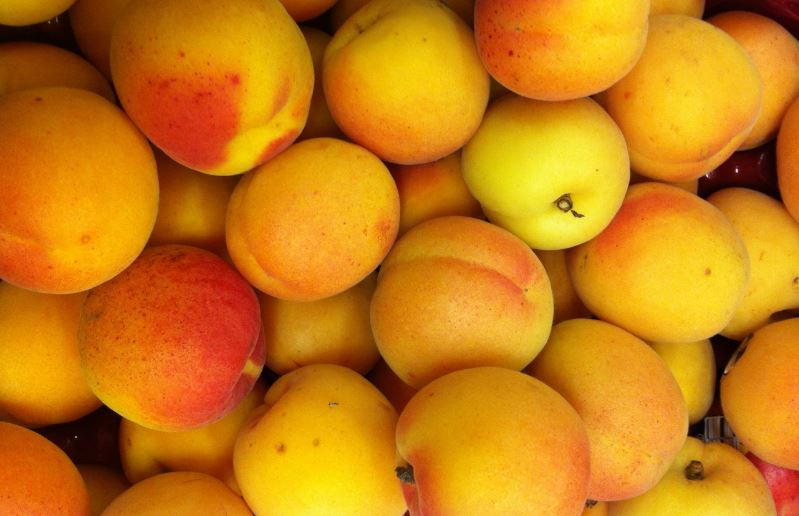 Pile of apricots.