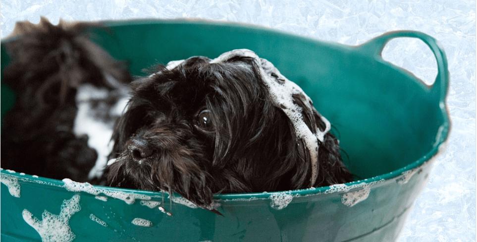 Dog in green bucket.