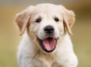 A happy puppy.