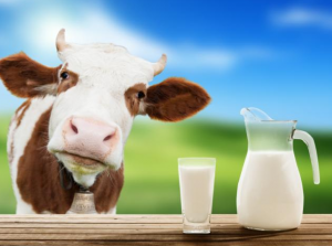 Cow next to glass and jug of milk.