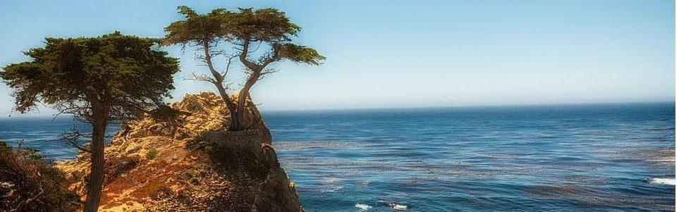 Tree on cliff next to sea.