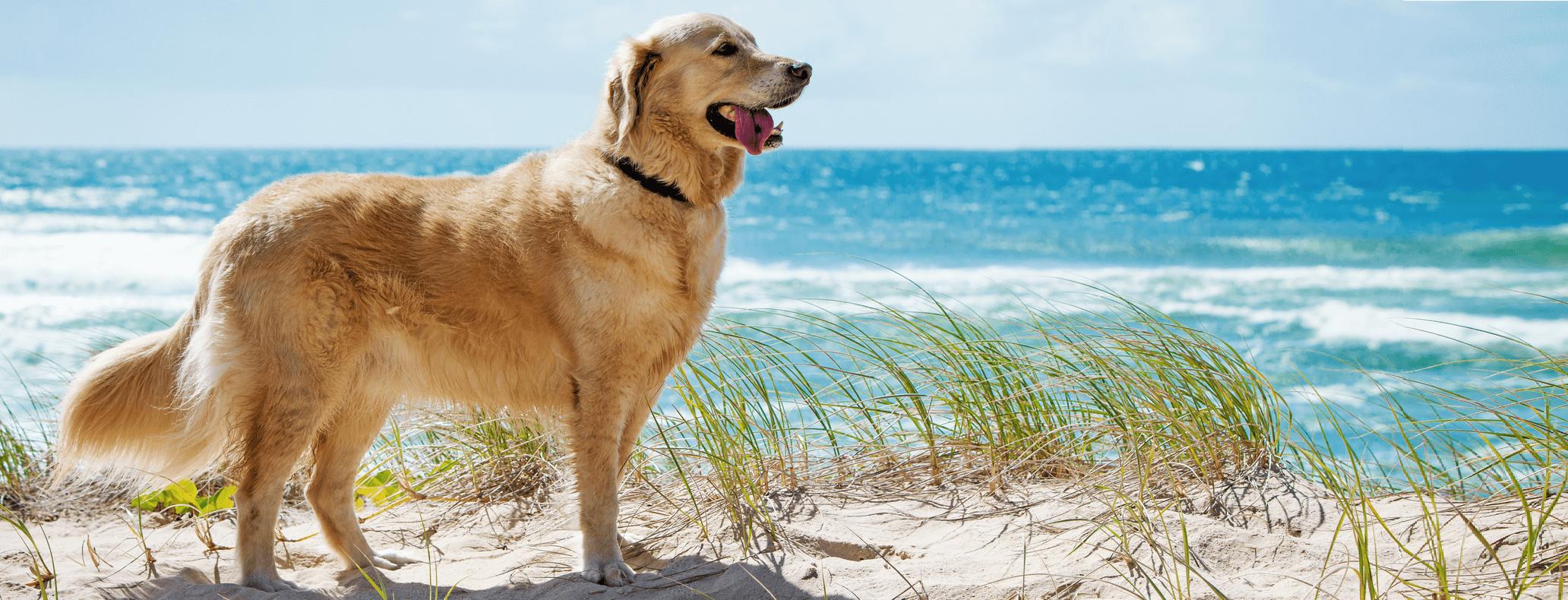 Dog by beach.