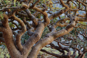 Close up of tree branches.