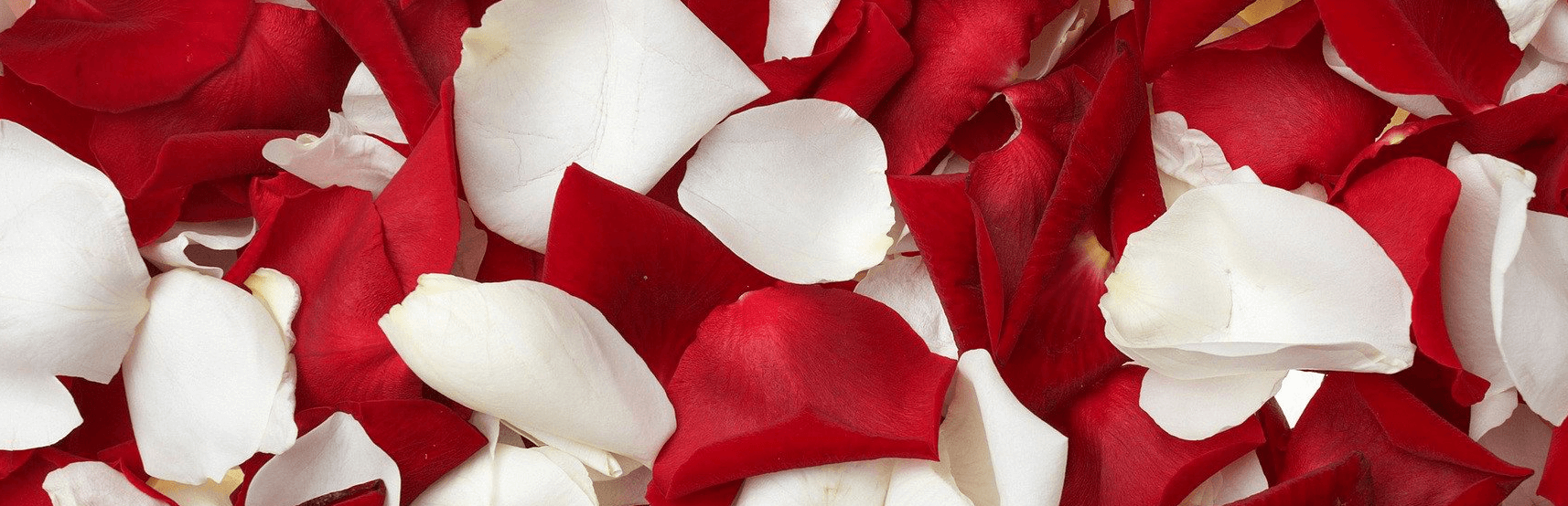 Red and white rose petals.