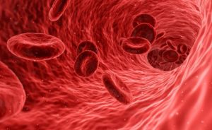 Red blood cells travelling inside body.