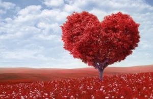Red tree shaped like a heart.
