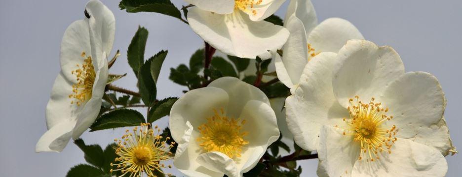 White flower plant.
