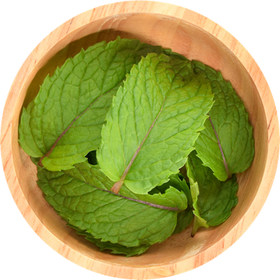 Mint in a bowl.