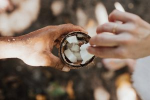 Hands taking coconut pieces from coconut.