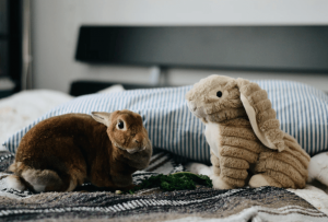 A real bunny and a fake bunny on a bed.