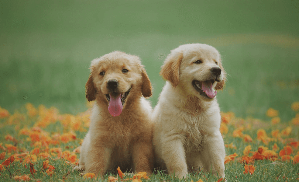 Two dogs in grass.
